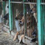стань другом помощь животным