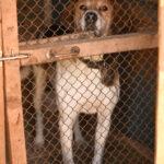 помощь приюту для бездомных животных в краснознаменске